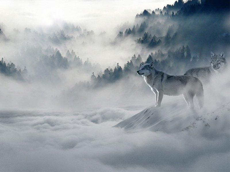 Creative Wolf